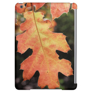 California, An autumn colored Oak leaf