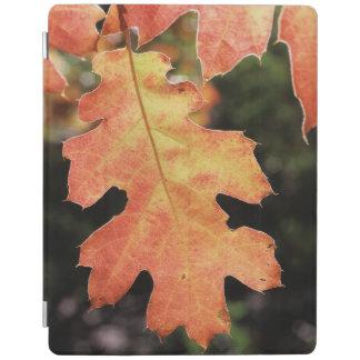 California, An autumn colored Oak leaf iPad Cover
