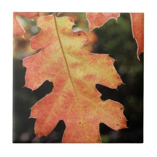 California, An autumn colored Oak leaf Tile