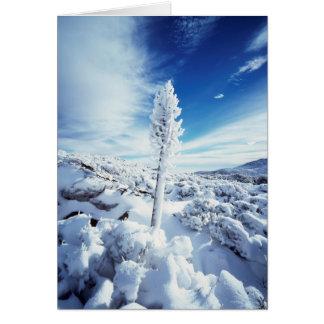 California, Anza Borrego Desert State Park 2 Card