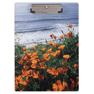 California, Big Sur Coast, California Poppy Clipboard