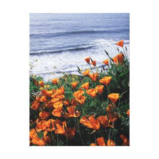 California, Big Sur Coast, California Poppy Gallery Wrapped Canvas