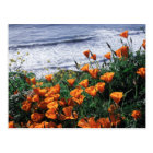 California, Big Sur Coast, California Poppy Postcard