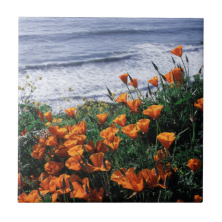 California, Big Sur Coast, California Poppy Tile