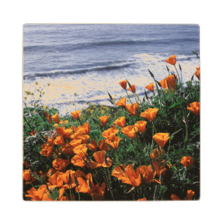 California, Big Sur Coast, California Poppy Wood Coaster