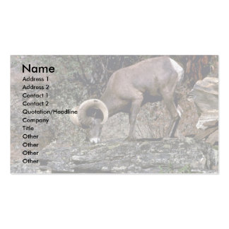 California bighorn sheep (Young adult ram) Business Cards