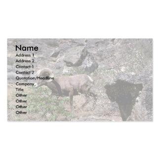 California bighorn sheep (Young adult ram) Business Card Templates
