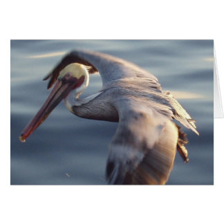 California Brown Pelican Card