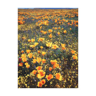 California, Cleveland National Forest Canvas Print