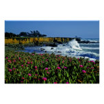 California Coast Flowers Poster
