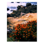 California Coastal Floral Postcard