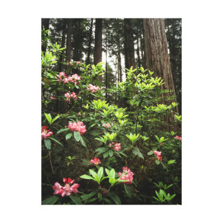 California, Del Norte Coast Redwoods State Park Stretched Canvas Prints
