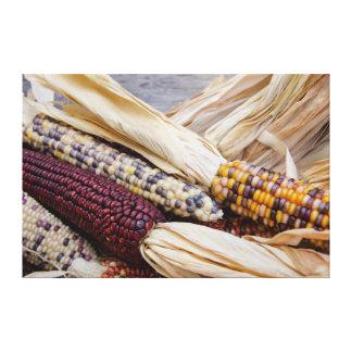 California. Fall Harvest Colorful Indian Corn Canvas Print