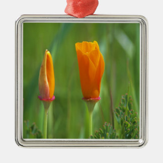 California golden poppies in a green field 2 christmas ornament