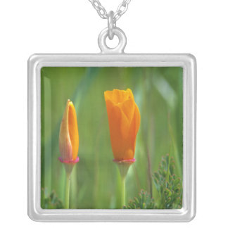 California golden poppies in a green field 2 silver plated necklace