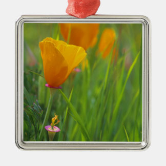 California golden poppies in a green field christmas ornament