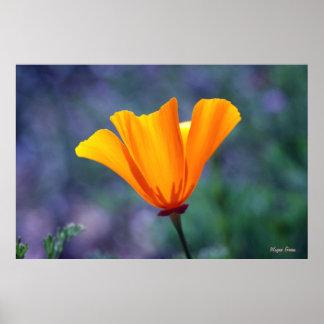 California Golden Poppy Print