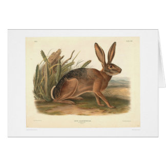 California Hare by Audubon (0177A) Greeting Card