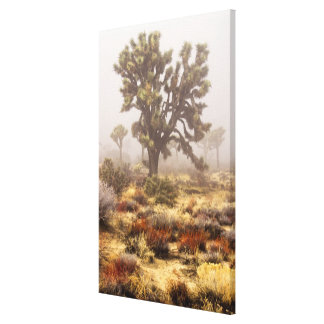 California: Joshua Tree National Monument, Canvas Print
