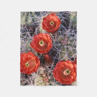 California, Joshua Tree National Park, Claret Fleece Blanket