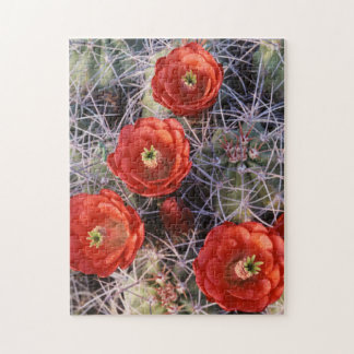 California, Joshua Tree National Park, Claret Jigsaw Puzzle