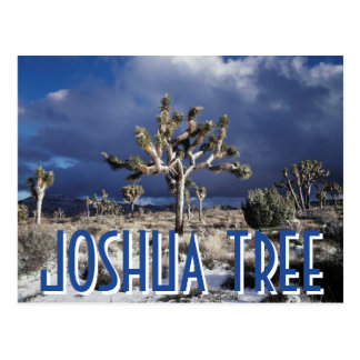 California, Joshua Tree National Park Postcard