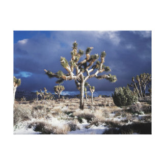 California, Joshua Tree National Park Stretched Canvas Prints