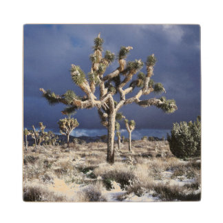 California, Joshua Tree National Park Wood Coaster