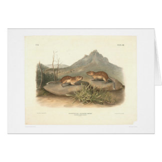 California Marmots by Audubon (0184A) Card