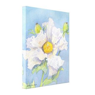 California Matilija Poppy Romneya White Cloud Canvas Prints