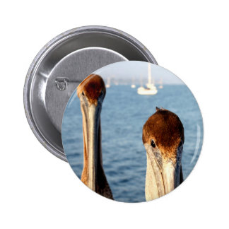 California Pelicans Pin
