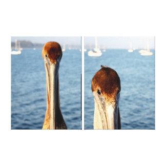 California Pelicans Canvas Prints