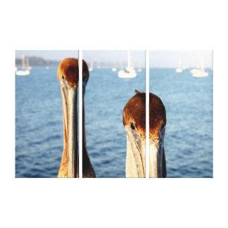California Pelicans Gallery Wrap Canvas