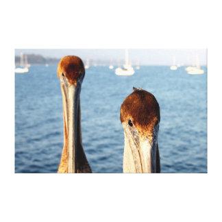 California Pelicans Stretched Canvas Prints