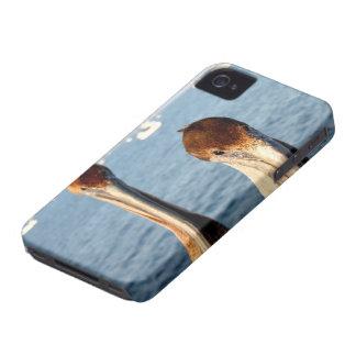 California Pelicans Case-Mate iPhone 4 Case