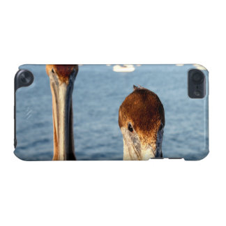 California Pelicans iPod Touch (5th Generation) Case