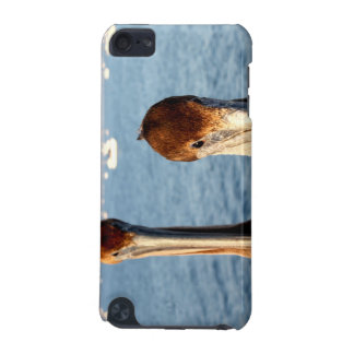 California Pelicans iPod Touch 5G Cases
