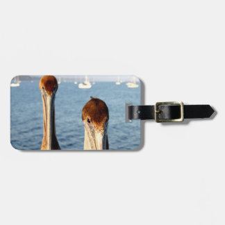 California Pelicans Bag Tags