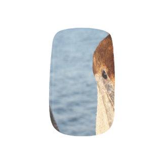 California Pelicans Minx® Nail Wraps