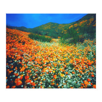 California Poppies and Popcorn wildflowers Gallery Wrapped Canvas