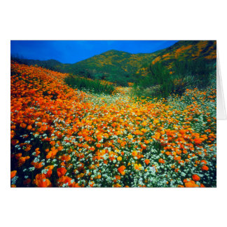 California Poppies and Popcorn wildflowers Card