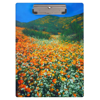 California Poppies and Popcorn wildflowers Clipboard