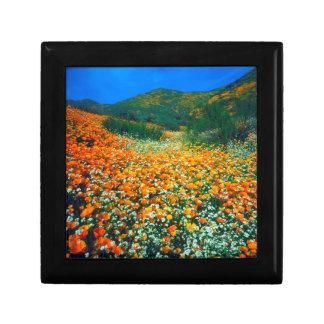 California Poppies and Popcorn wildflowers Gift Box