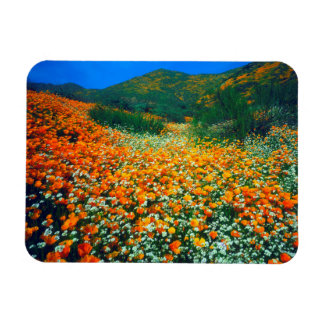 California Poppies and Popcorn wildflowers Magnet
