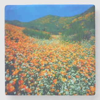 California Poppies and Popcorn wildflowers Stone Coaster