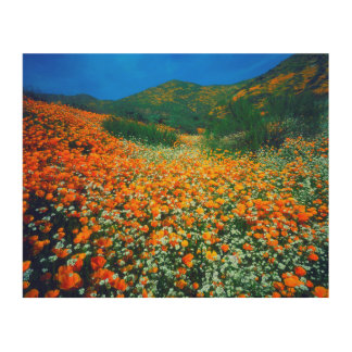 California Poppies and Popcorn wildflowers Wood Wall Art