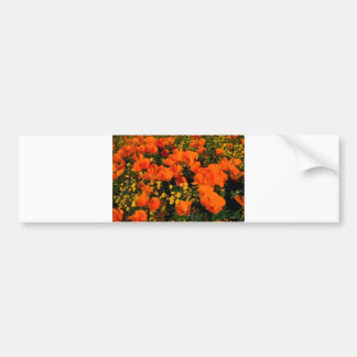 California Poppies Bumper Sticker
