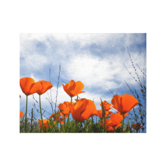 California Poppies Stretched Canvas Prints