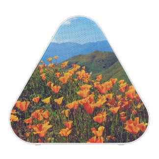California poppies covering a hillside