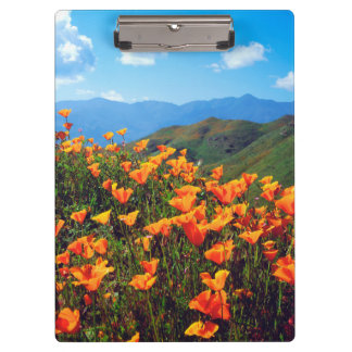 California poppies covering a hillside clipboards